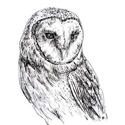 owl by n-11