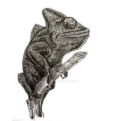 chameleon by n-11