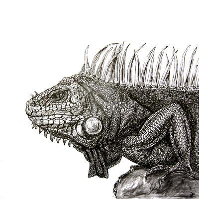 iguana by n-11