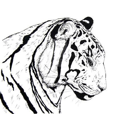 tiger by n-11