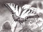 Butterfly by Kenzie11593