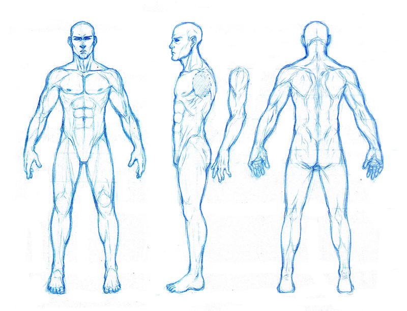 male anatomy orthographics by dathron on deviantart, Human Body