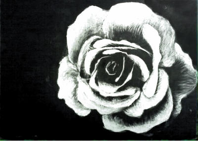 Scratchboard Rose by TheSlaveQueen on deviantART Scratch Art Roses