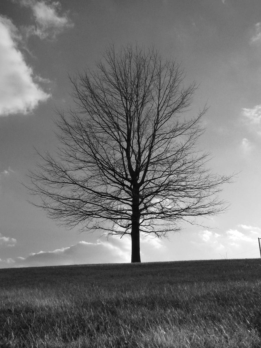 Black And White Tree By Dom410