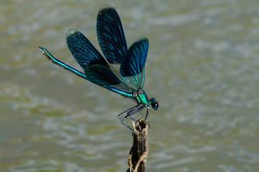 Dragon...fly