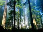Foggy Forest by Berussyan