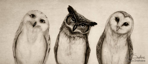 The Owls Three