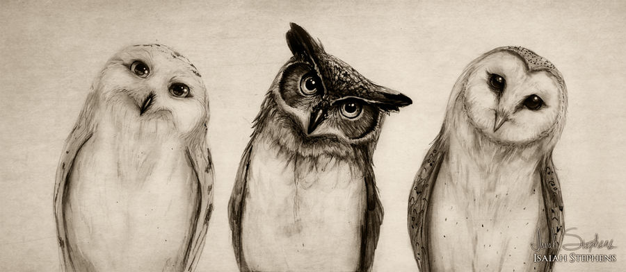 The Owls Three