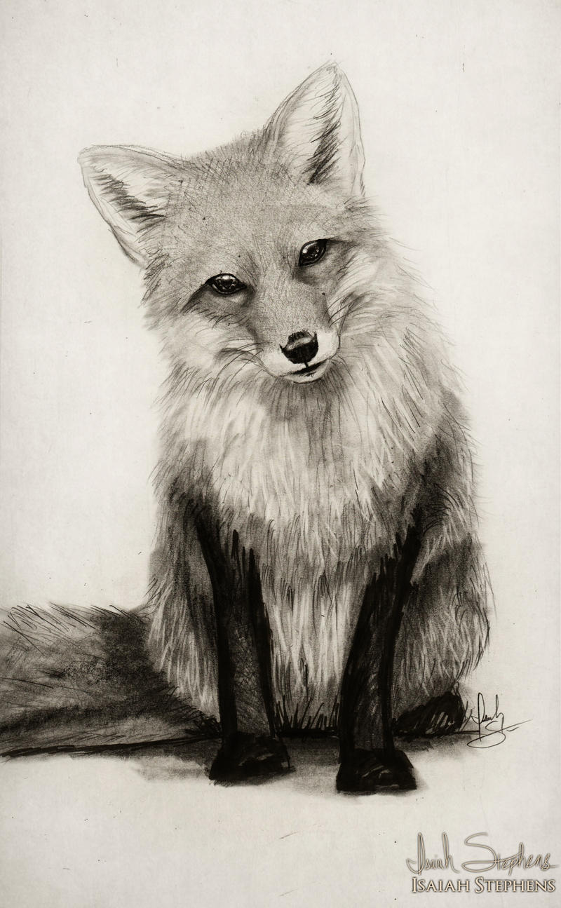 Fox face drawing - photo#7
