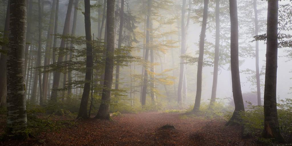 Nebel by Bibwue
