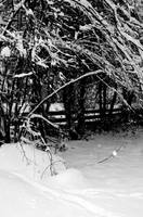 Winter Hallow