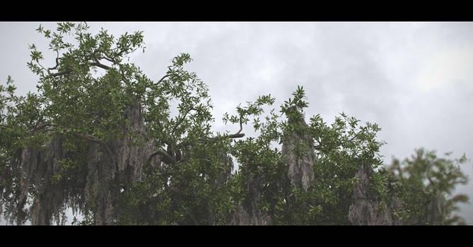 Patreon Tutorial #1 - Tree Asset 2