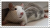 Pet rat stamp by SatoshiMist