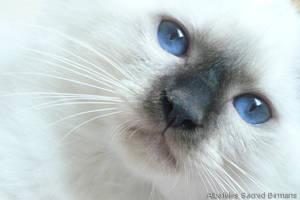 Blue eyes by claudiabirmans