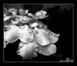 Sorrow by Nathyrra
