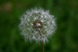 Make a Wish by jamieoliver22