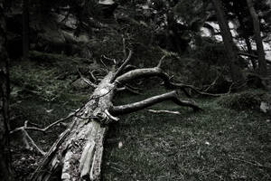 The Broken Branch 2 by jamieoliver22