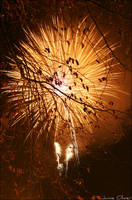 Golden Explosion by jamieoliver22