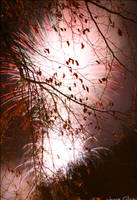 Pink Storm by jamieoliver22
