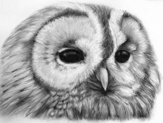 Owl. by SediciBis