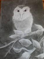 Barn Owl by Loneshadowlynx