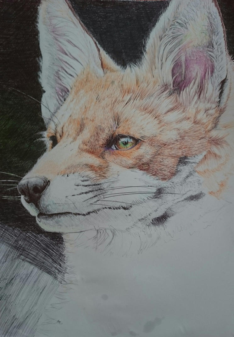 Fox WIP, ballpoint by Lageveen