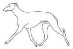 Sighthound base