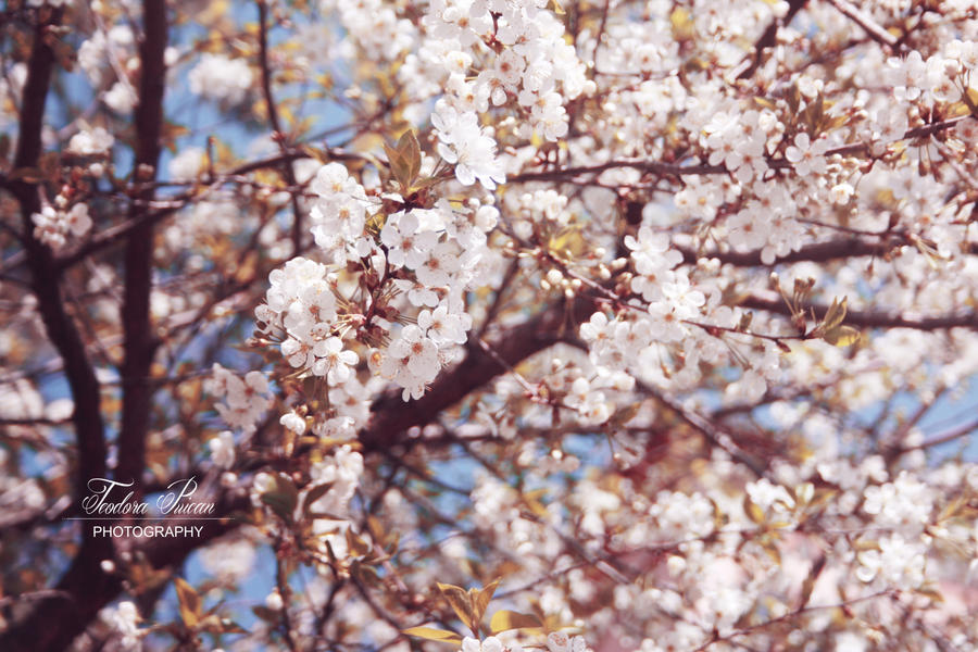 Spring by xChristina27x