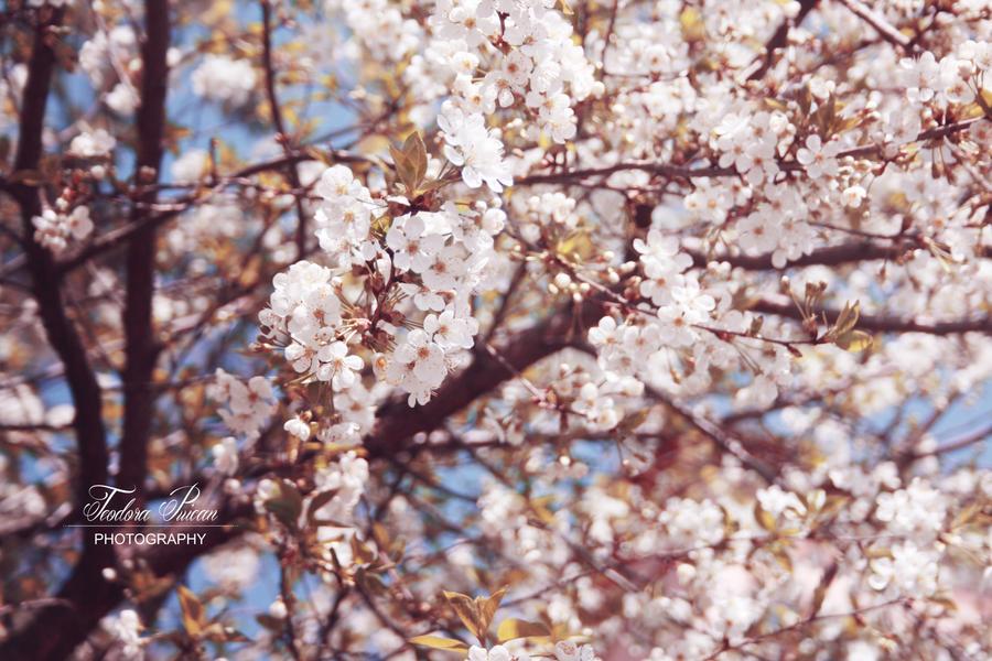 Spring by xChristina27x