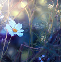 Is Spring Here Yet by xChristina27x
