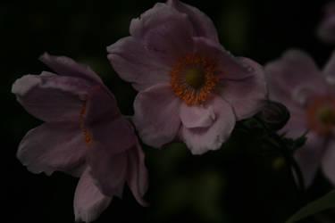 Pink... by Jedi-Gemstone
