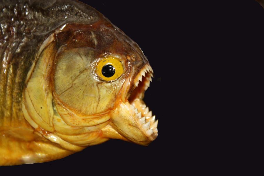 EYESFRIEDOPEN's Profile Picture