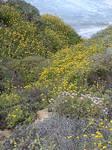 Yellowed ravine