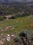 Hills of Untouched Orchids
