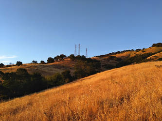 Rolling hills of summer gold