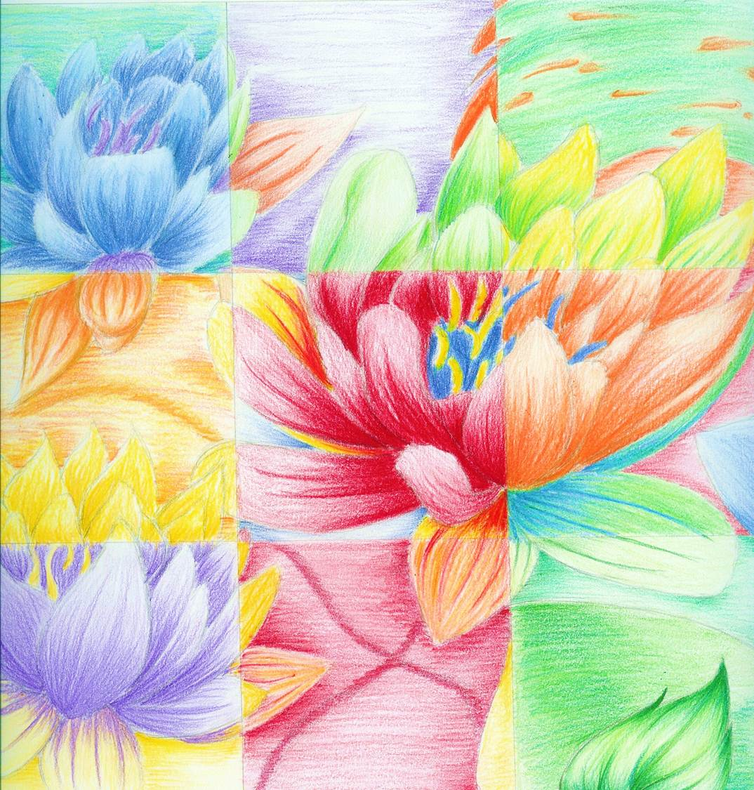 Pencil Drawings Of Flowers and Beautiful Flower Drawings ...