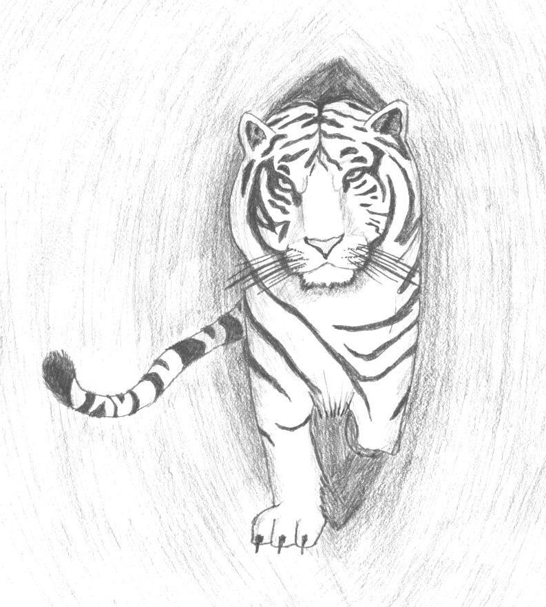 White Tiger Drawing by King-Radical-II - 410.9KB