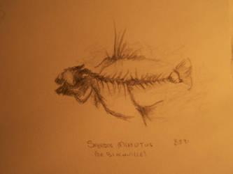 Fish fossil by sharlij