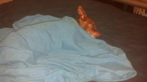 Coco's new blanket