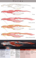 Anatomy of Oorieu by VaraAnn