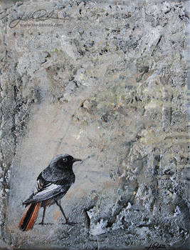 Structures - Black Redstart