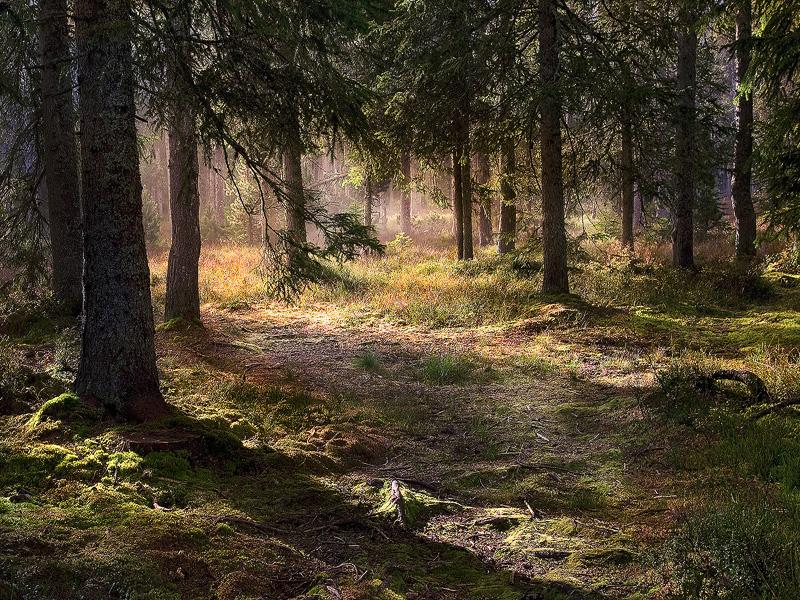 Undergrowth confinment by alexandre-deschaumes