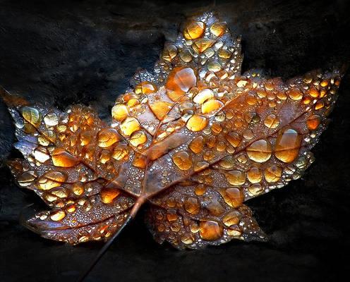Autumn Ethereal