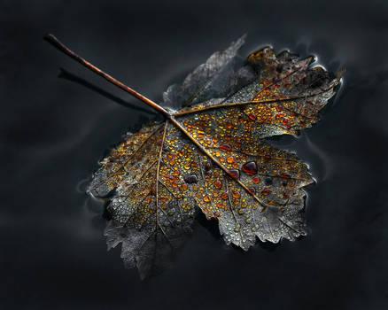 Autumn Ethereal - Part II