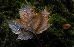 Autumn Ethereal -IV-