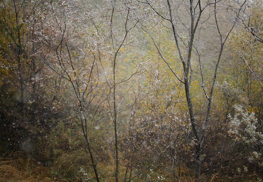 Opalescent Dream II by alexandre-deschaumes