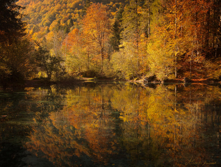 Forest of October by alexandre-deschaumes