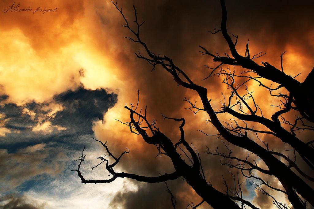 Reaching the Sky by alexandre-deschaumes