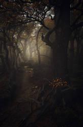 Enter | Forest of Souls