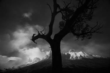 L'arbre Gardien by alexandre-deschaumes